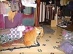 And of course, here''s Cheddar-Cat, the official loom room helper. I think she stuck her nose into several of these pictures... she approves weavings by sleeping on them.Loom Room 4Debbie Rindfleisch