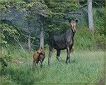 This mother & Baby were located just a few miles from Greenville, Maine. This was in the area of Moosehorn Lake. copyright 2005 Steve Slayton.