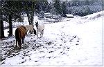 This picture was taken during a rare snow in The Georgia Mountains in January of 2002. Copyright 2002 Steve Slayton.